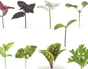 3D model Herbs Set