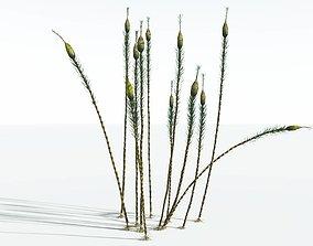 EVERYPlant Suckows Horsetail Tree SINGLE --1 Model--