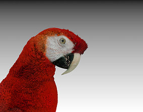 3D asset VR / AR ready Red Macaw Parrot animated