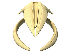 Humpback Whale Skull 3D