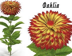 3D Dahlia orange