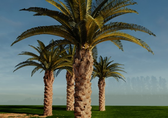 Photoscanned palm trees