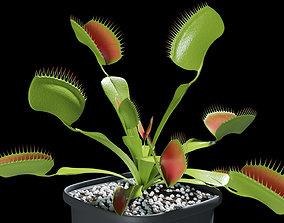 3D model Venus flytrap