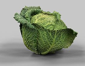 Savoy Cabbage 3D asset