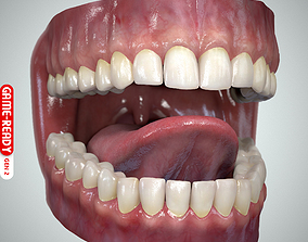 Teeth and Tongue Set 3D asset