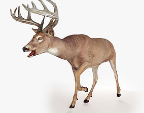 3D model animated Deer Rigged