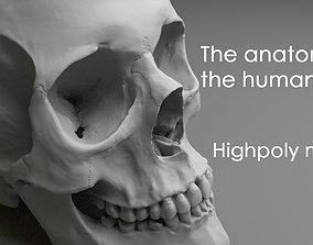 3D model The anatomy of the human skull Highploy mesh