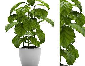 3D COFFEE PLANT