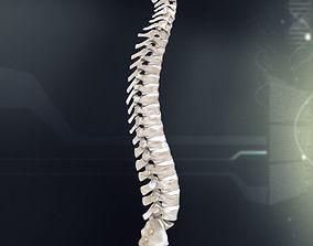 anatomy 3D Human Spinal Anatomy