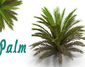 3D Palm 1