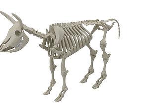 3D model Cow Skeleton