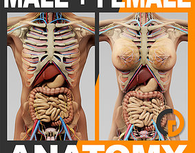 3D Human Anatomy - Body Skeleton and Internal