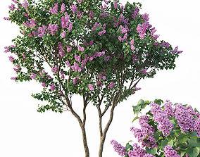 3D model Lilac Syringa vulgaris Nr3 - Tree