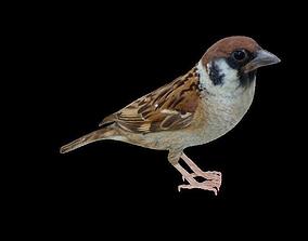 VR / AR ready PBR Sparrow 3D