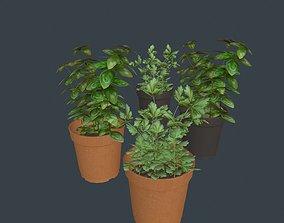 Game Ready Herbs 3D asset