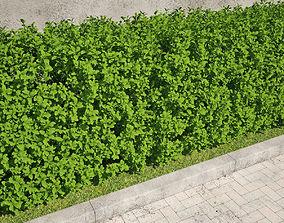 hedge 02 3D model