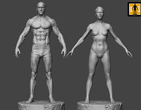 Male and female anatomy models pack