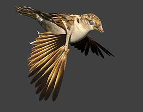 sparrow 3D animated
