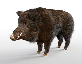 3D asset Wild Boar Rigged Hairs