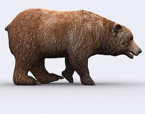 animated low-poly 3DRT - Wild Bear