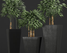 Plants Collection 10 3D model