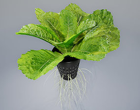lettuce grean 3D