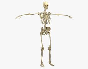 3D model Human Male Skeleton