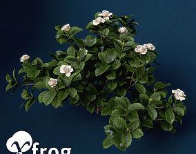 XfrogPlants Gardenia 3D