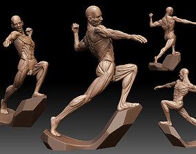 Male Anatomy Ecorche 3D model