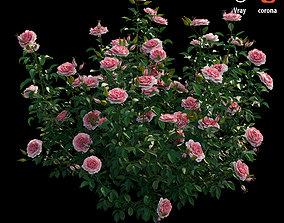 Rose plant set 22 3D model