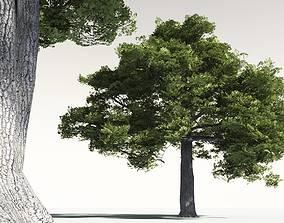 3D EVERYPlant English Oak 16 -- 10 Models