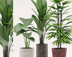 Plants 107 3D model