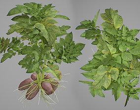 3D Potato plant