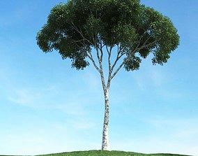 3D model Tall Tree