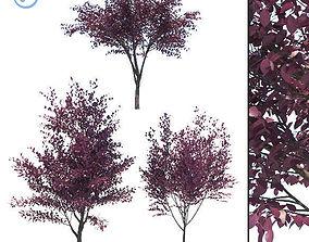 Prunus Cerasifera 3D
