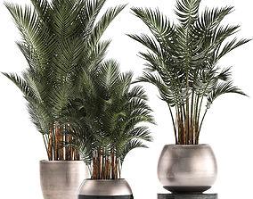 Collection of Exotic plants palms Howea 3D model