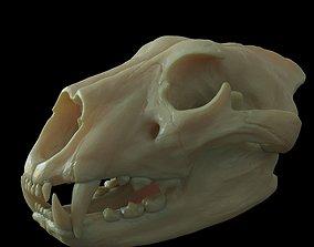Lion skull for 3D print