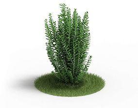 Green Bushy Plant 3D
