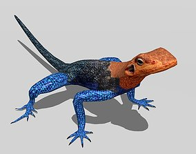 3D asset Agama Lizard