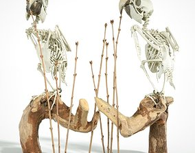 Parrot Skeleton 3D scanned