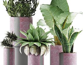 Plants Collection 41 3D