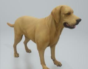 Labrador retriever pet 3D