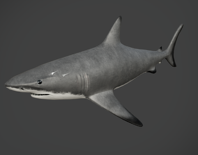 reef shark 3D asset