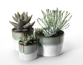 3D Succulent Pot Set with Echeveria and Rosemary Plants