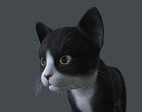 3D KITN-002 Kitten Cat