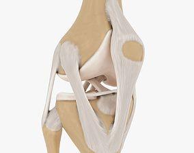 3D model Knee-joint