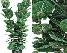 flowers Plant in Pot Flowerpot Exotic Plant 3D model