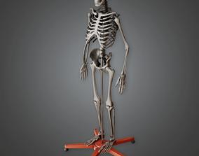 3D asset CLA - Lab Skeleton - PBR Game Ready