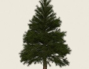 Game Ready Conifer Tree 06 3D asset