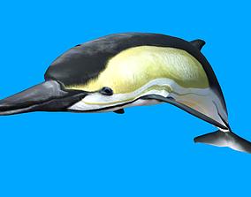 Dolphin 3D Model animated VR / AR ready